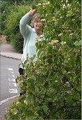 Cllr Jenni Ferrans is pressing MKDP to prune their trees on Monkston Park